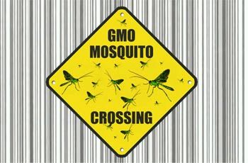 mosquito_crossing