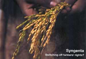 Syngenta_switching
