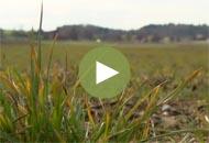 newsletter video 13.53.14